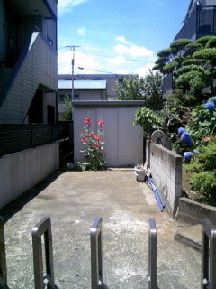 TS381801006.JPG